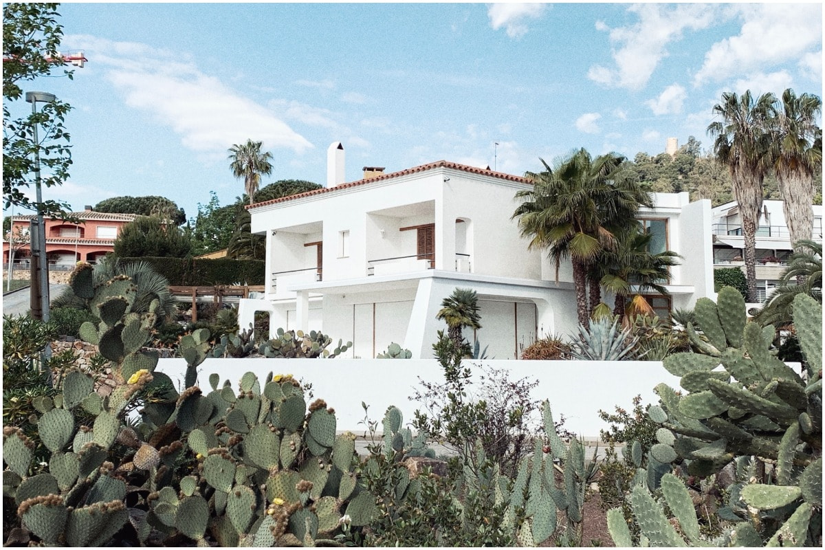 Cactus in front of a house